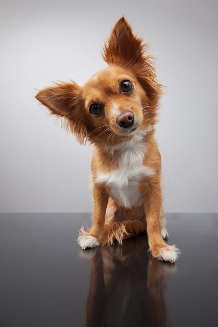 dog-1723894_640